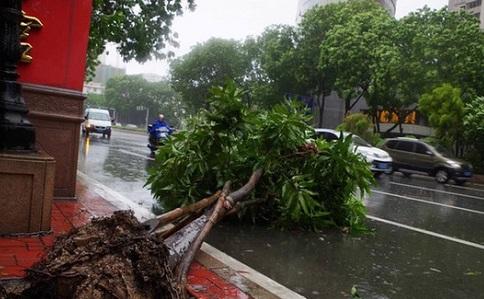对于台风天行车上海陪驾公司的忠告